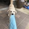 タオルを引っ張る力も強くなっています。