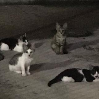 危ないところに住んでいる子猫たちです。