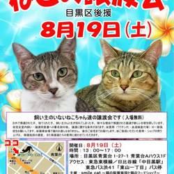 ★8月19日(土)「ねこの譲渡会(目黒区後援)」smile cat@中目黒(室内)