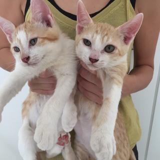 茶白の子猫ちゃん2匹います
