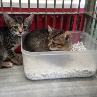 県外でも里親OKです!子猫三匹が助けを待っています