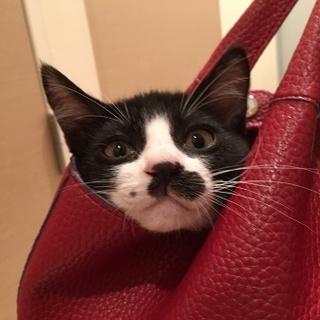 性格花丸★面白子猫のチョビ!
