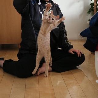 【急募】明るく元気で懐っこい猫ちゃん