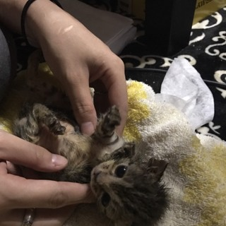 6匹の子猫ちゃん♡