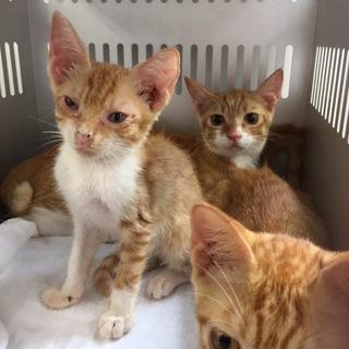 県外の方もお願いします!期限ギリギリ子猫三匹です
