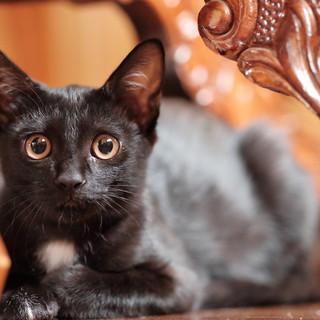 おしゃれ女子♪きれいな黒猫のノアちゃん