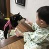 推定6〜8歳の温厚で人懐こいメスの柴犬の里親募集中 サムネイル6