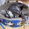 人大好き猫大好き配達のおぢさんも大好きラッキーくん サムネイル2