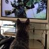 人大好き猫大好き配達のおぢさんも大好きラッキーくん サムネイル3