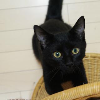 なつっこい黒子猫、お子さんもOK