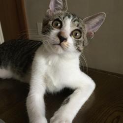 猫の里親さん探し(竹の塚里親会) サムネイル3
