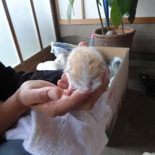 産まれたばかりの子猫5匹。性別不明