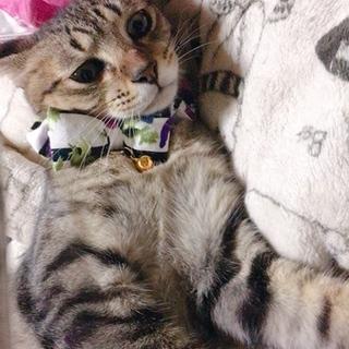 里親募集!人懐こいキジトラ猫です!