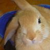 6月後半生まれ 子ウサギ 募集