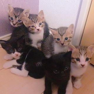 生後1ヶ月子猫の里親さん募集!