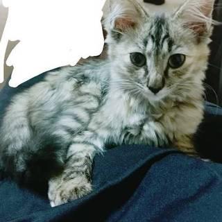 [福岡市]子猫 里親募集