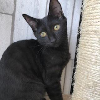 とっても優しい黒猫ココア
