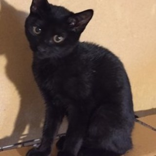 【8/20東日本橋】黒猫の女の子♡ルルちゃん