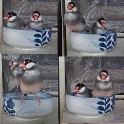 小鳥たちのようす(その6)