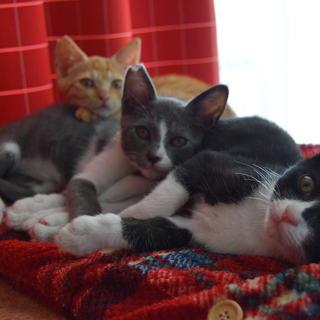 超カワイイ兄弟子猫♫2匹一緒に大募集