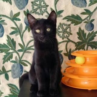 お利口さん女子 黒子猫のジジちゃん