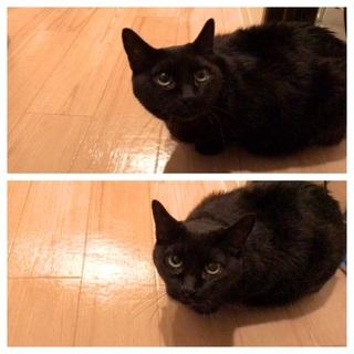 大人しくクールで小柄な黒猫女子