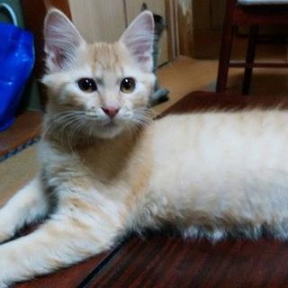 ★お外で保護したキジトラ子猫★