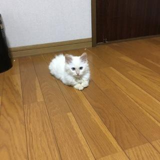 生後3ヶ月の子猫ちゃんです!