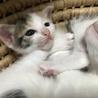 子猫ちゃんฅ^•ﻌ•^ฅラスト1人*