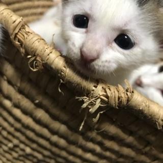 子猫ちゃんฅ^•ﻌ•^ฅ