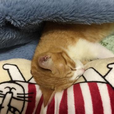 枕に毛布にポカポカ!