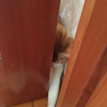 ドアはこうやって開けるべし!!!