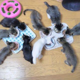 多頭飼い崩壊からの子猫たち(残り5匹となりました)