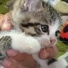 可愛い子猫を宜しくお願いします(>_<)