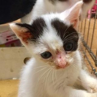 約1ヶ月 パワフル子猫