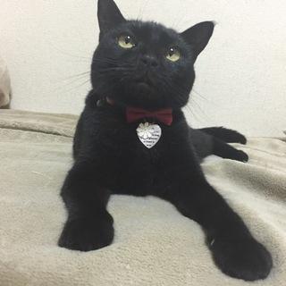 とてもおっとりな黒猫の女の子です!