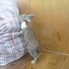 ミニウサギ 3月11日生まれ 青年期