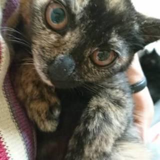 3ヶ月サビ子猫ちゃん