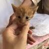 生後1ヶ月の子猫ちゃん