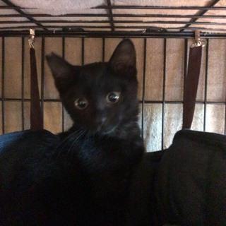シャイな黒猫、富松くんです!