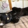 ジジみたいな子猫♂(推定2ヶ月)の里親募集 サムネイル4
