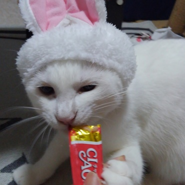 ウサギ飼いました
