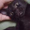 漆黒の美少女へちま♪ 3ヶ月