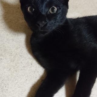 黒猫&白黒猫の4ヶ月の子達です。