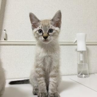 かわいい子猫、女の子です(^ ^)