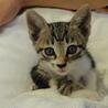 かわいい子猫を救ってあげてください