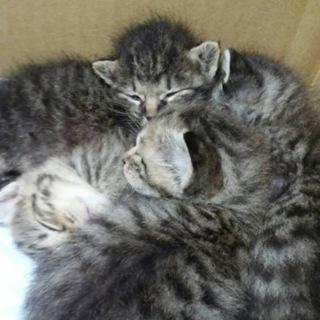 親を亡くしたミルク子猫たち