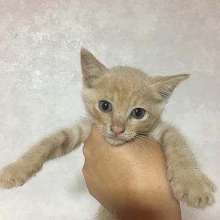 1ヶ月半子猫男の子 女の子
