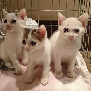 2ヶ月半 男の子3兄弟