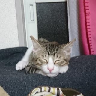 野良子猫保護してます。みとくん